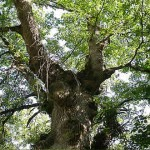 El bosque. Granja Escuela Haritz Berri
