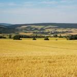 Campos de cultivo. Granja Escuela Haritz Berri