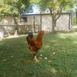 Aves. Granja Escuela haritz Berri