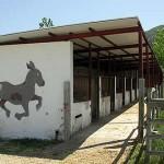 caballar01-Granja-Fundacion-Ilundain