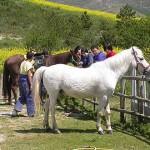 caballar02-Granja-Fundacion-Ilundain