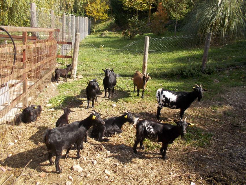 Nave de cabras y vacas. Granja Escuela Haritz Berri