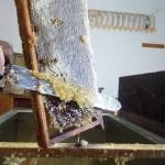 Las abejas. Granja Escuela haritz Berri