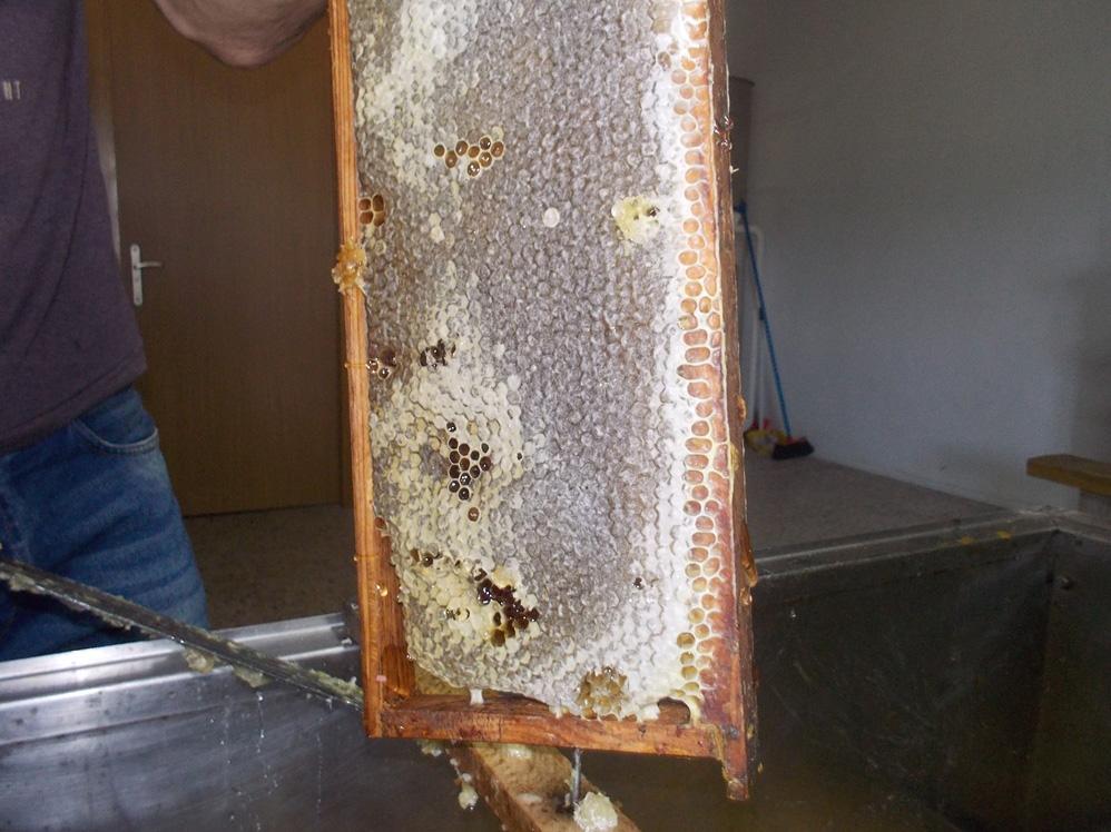 xtraccion de miel - granja escuela haritz berri (1)