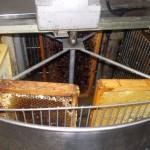 extraccion de miel - granja escuela haritz berri (3)