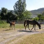 picadero02-Granja-Fundacion-Ilundain