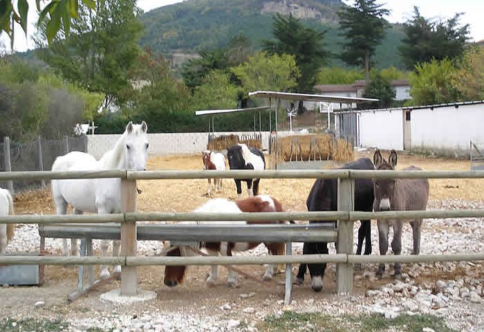 picadero04-Granja-Fundacion-Ilundain
