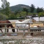 picadero05-Granja-Fundacion-Ilundain